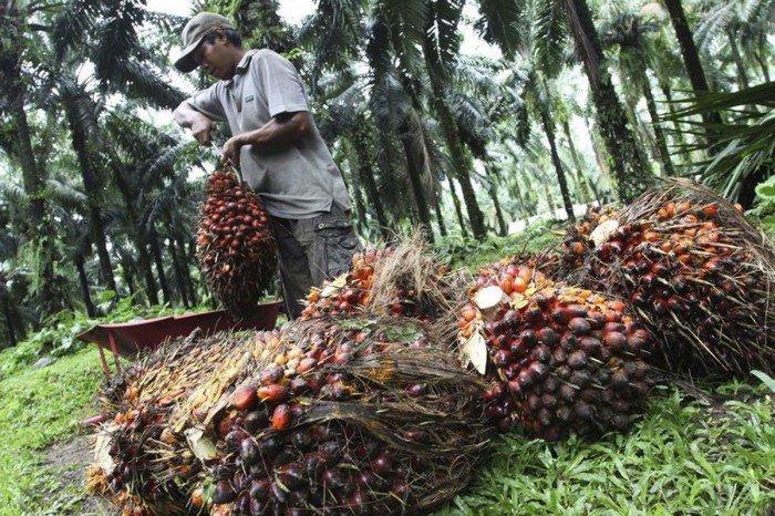 低產料拖累種植股次季業績 印尼業務支撐本地公司表現