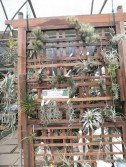 各式品種的空氣黃梨隨手一掛在木架上,展現不同的風情。