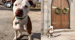 美國肯塔基州一個小市鎮最新一任的市長是隻3歲大的救難犬。