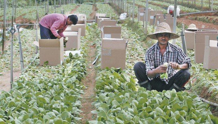 【創意拓藍海】Tanahmu手機App 農產品交易新平台