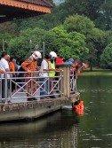太平湖驚傳華裔少婦躍湖后,消拯員即時趕到現場協助尋人。