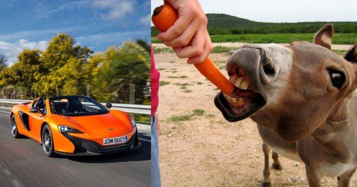 疑驴子把橘色跑车当萝卜啃 车主索赔近3万令吉