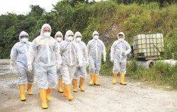 沙巴州獸醫局官員週五進入養殖場,穿戴完整的消毒裝備,進行檢驗的工作。