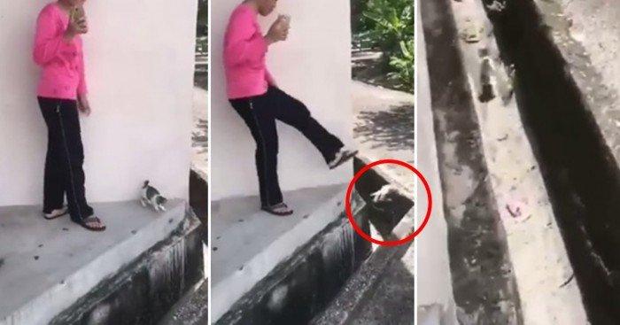 無故將小貓踢入水溝 巫裔少女被判守行一年