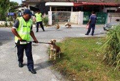 流浪毛孩過度繁殖難免會衍生民生課題,執法單位捕抓時若過于暴力則將引起愛狗者的反彈,因此推廣節育工作是ISPCA近年大力鼓吹的解決方案。