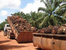 11月棕油出口疲軟,只有138萬公噸,相比上個月的158萬公 噸,放緩12.87%。