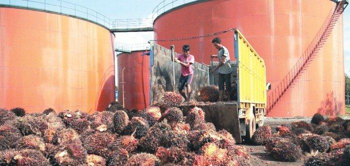 採收加快推高產量 棕油庫存料增11%