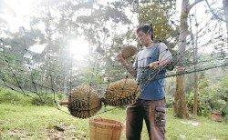 沈志勤鼓勵農業與旅遊業結合,推廣農業旅遊,榴槤園主可推出榴槤園觀光配套,讓外國遊客在榴槤季節來馬品嚐剛從樹上掉下來的新鮮榴槤。