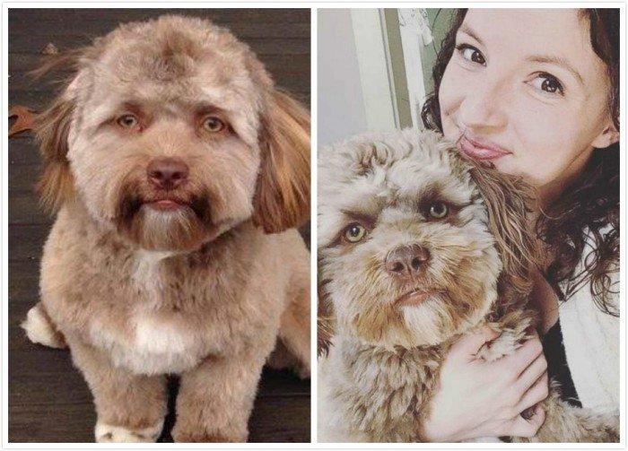 網傳人面犬來自美國 女主人否認電腦修圖