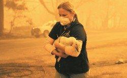 文圖拉一名獸醫,戴著口罩冒著危險,在災區中救出一隻受傷的鵝。山火來得太快,災民緊急逃離家園,來不及將寵物和家禽帶走,幸運的就獲趕到救災的志願者和消防人員救出,不幸的則活活燒死。
