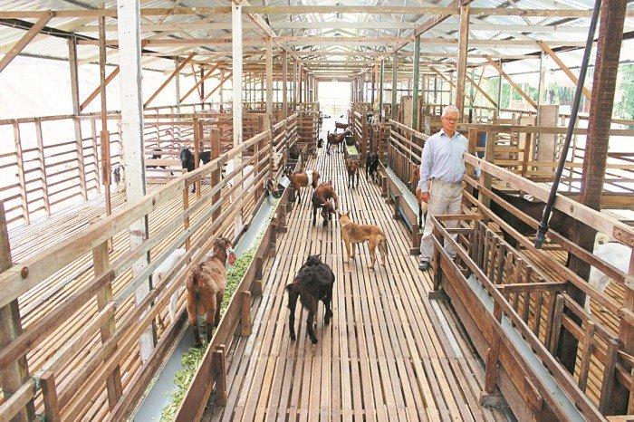 【農情】看準市場潛能 退休議員養羊樂