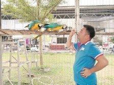 王順寶與藍黃金剛鸚鵡玩耍,活潑又善于學習人類語言的鸚鵡,逗趣可愛。