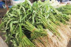 雨季影響平芭菜產量,導致菜心、芫菜及蕹菜本週起漲價約40%。