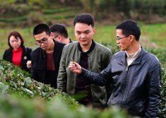 科技特派員劉國英(右),在福建省武夷山市星村鎮,給學生們講解茶葉知識。共青團中央印發的《關於深入開展鄉村振興青春建功的意見》,引發外界聯想到文革時期的知青上山下鄉運動。