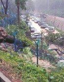 每逢颳風下雨,隆市內到處可見大樹倒塌事故。吉隆坡市長諾希山透露,去年共發生700棵大樹倒塌事件,另有614棵大樹不穩固,樹枝斷落。