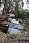 狂吹倒樹木,邊佳蘭海邊路3輛轎車被倒下的大樹壓個正 著,所幸沒有釀成人命傷亡。 (沈茂山提供)