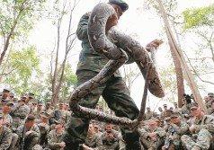 美泰「金色眼鏡蛇」聯合軍演在泰國 舉行。泰國士兵展示如何擒抓眼鏡蛇, 讓美國士兵們嘖嘖稱奇,有的還拿出手 機拍照留念。