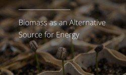 生物質將成為代替化石燃料的替代能源。