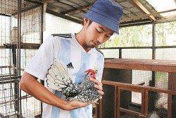 張子泰手抱的峇迪雞,外形黑白分明。