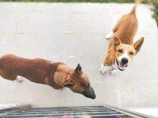 黃玉萍收養兩隻流浪狗,也通過自身的方式進行宣導,期望 改變動物遭施虐的情況。