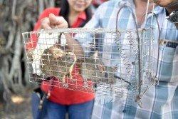 增江北區早市巴剎出現鼠患問題,商販受促積極捕捉老鼠。(攝影:伍信隆)