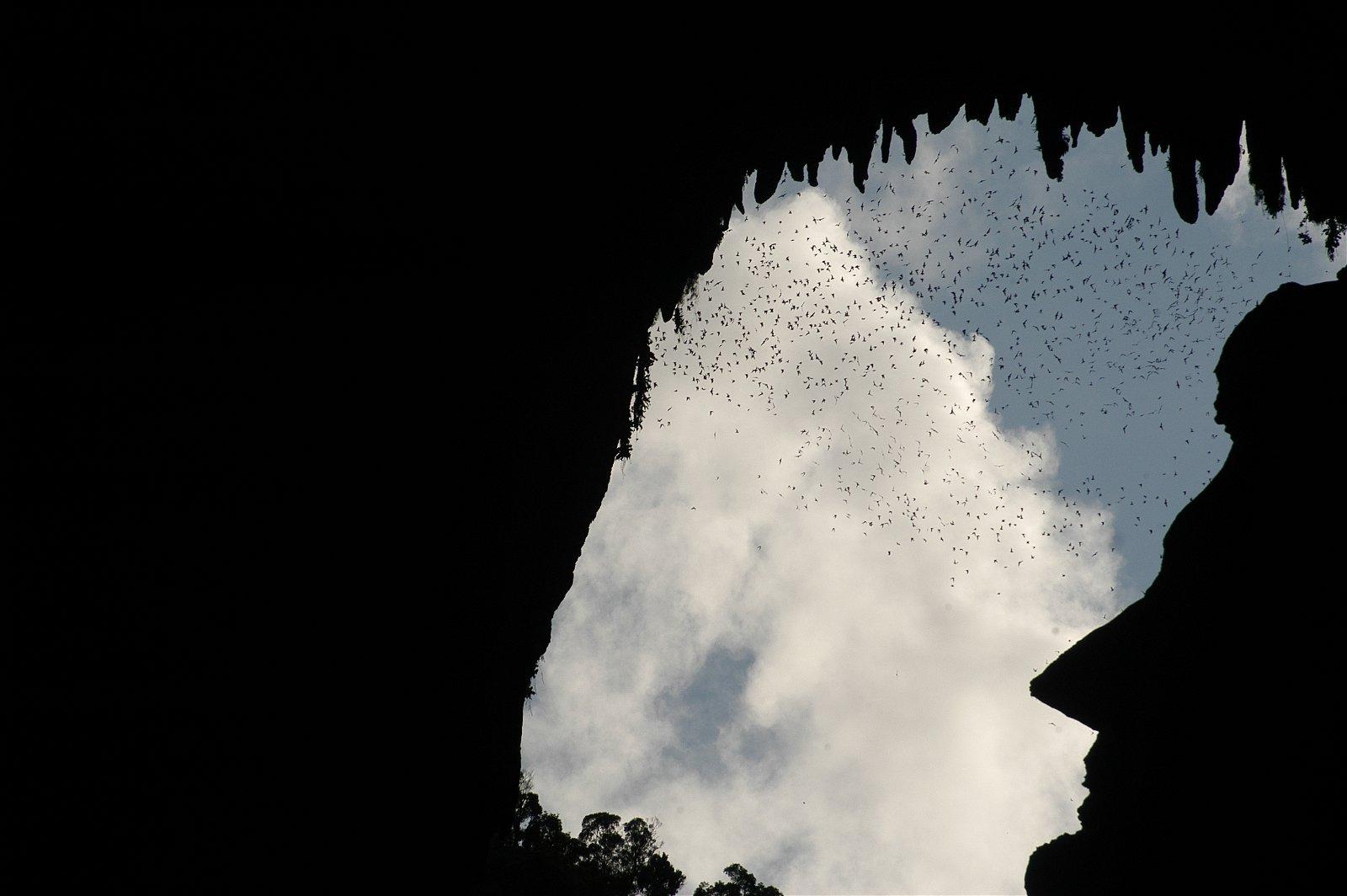 砂劳越姆鲁国家公园鹿洞,除了在傍晚时分能一览超过200万只蝙蝠大军外出觅食的奇景外,还可以看到山壁岩石所呈现出的前美国总统林肯侧面剪影。(图取自大马观光局)