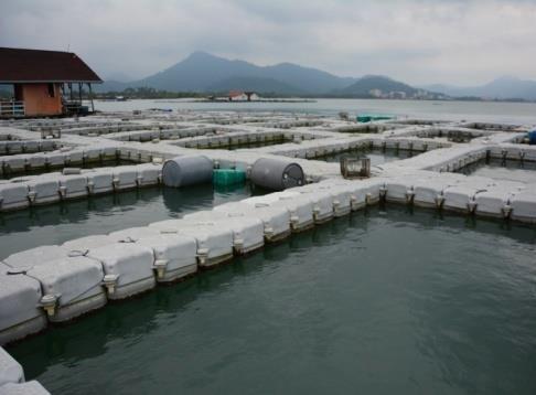 浮罗交怡孟胡鲁的饲养箱网鱼计划,被揭发有箱网却没有养鱼。