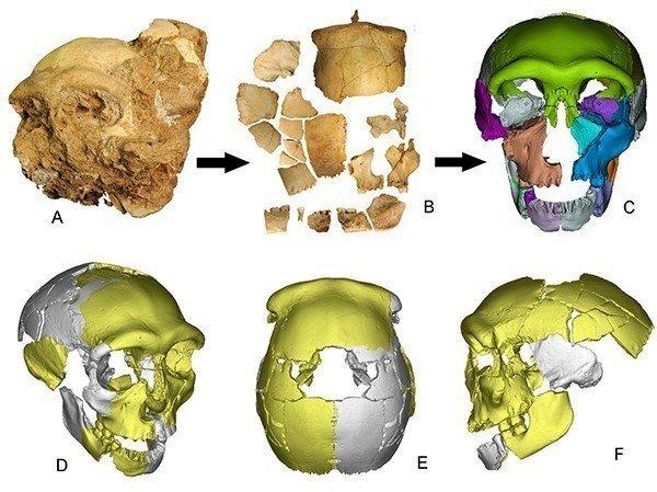 这是从头骨化石出土,到去除地层堆积物后的头骨骨化石碎片,到3D虚拟复原头骨化石的过程。