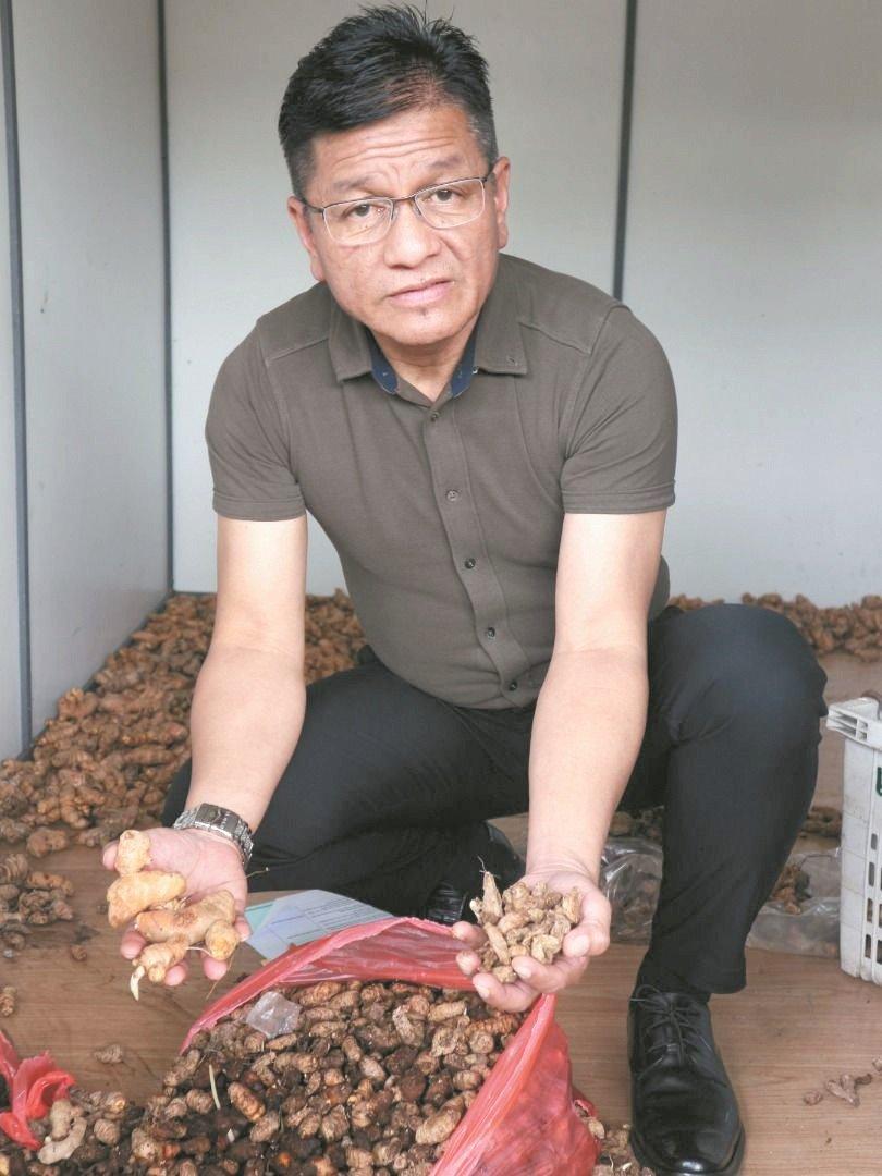 诺依占发现姜种收藏在货柜内,部分已经开始变坏。