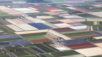 从高空俯瞰登海尔德的郁金香花田,就像一块花农编织的百衲被。