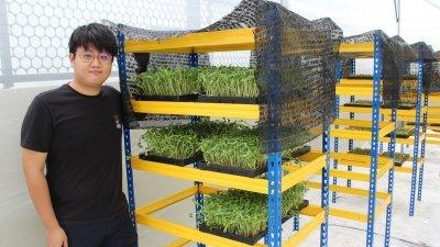 """毕业于石油工程系的张世和看中芽苗菜种植业在我国的发展潜能,进而放弃""""本行"""",投入其中。"""