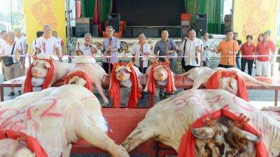 马振辉(左3)、方建明、庄喜胜、黄顺祥、郭庭源及郑国成在嘉宾陪同下主持峇都眼东莲清宫大肥猪重量竞赛的鸣锣仪式。