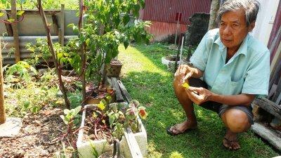叶耀满在自家屋后种蔬菜,生活简单节省。
