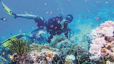 仙本那海岛的海水清澈湛蓝,珊瑚绚烂多彩,是国人度假的好去处。