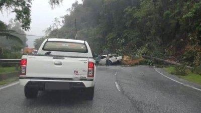 根据社交媒体流传的图片,可见一辆四驱车的右侧及引擎盖遭树木压中,但情况并不严重,车主在事发后已自行倒车离去。