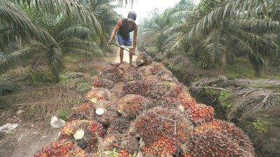 政府在预算案中宣布数项对种植领域有利的举措及原棕油价格回升,棕油业者将从中受惠。