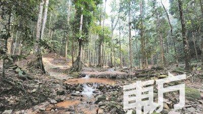 共和联邦森林公园拥有美丽的大自然景观,和珍贵的树种,漫步在一片绿意盎然的树林之中,更是令人感到心旷神怡。(摄影:邱继贤)