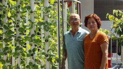潘耀财(左)与童玉兰巧合下接触水耕种植,随后成为城市农夫,丰富退休生活。