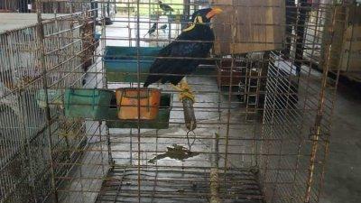 印尼妇女走私超过千只稀有鸟类,最终罪成坐牢。