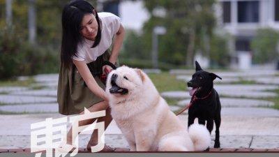 赖素盈表示,无论是购买回来的辛巴,还是领养的娜娜,它们都是她的爱犬,没有分别,若是一个人有心弃养,哪怕是贵如天价的名犬,还是会狠心丢掉的,所以她才致力宣扬养狗的正确观念。